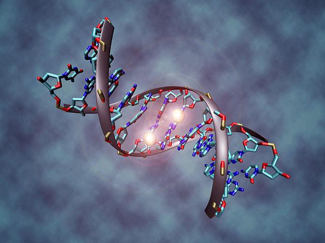 Consejo Genético Reproductivo
