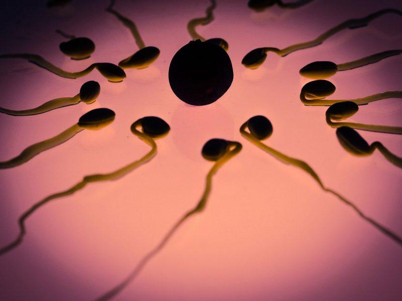 caos en la fertilidad del siglo XXI